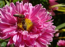 即将到来的昆虫灭绝:物联网如何拯救环境
